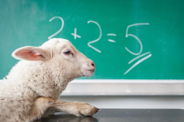 Stupid sheep and equation
